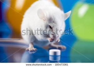 mouse research